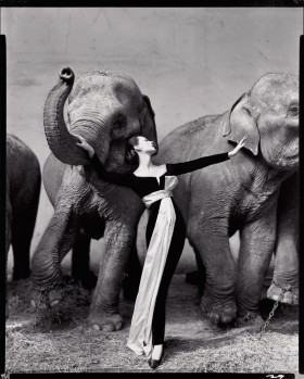 Dovima and the Elephants - Cirque d'Hiver, Paris - 1955 © The Richard Avedon Foundation